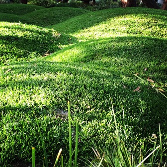 Landscaping rolling grass hills